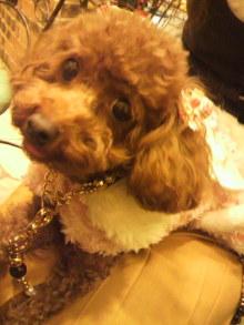 愛犬鈴ちゃん~トイプードル☆ライフスタイル~-2011111714090000.jpg