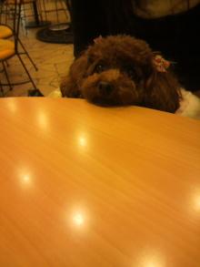 愛犬鈴ちゃん~トイプードル☆ライフスタイル~-2011111714270001.jpg