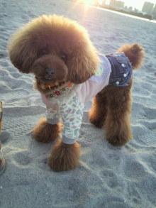 愛犬鈴ちゃん~トイプードル☆ライフスタイル~-2011111716090000.jpg