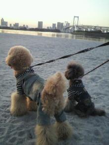 愛犬鈴ちゃん~トイプードル☆ライフスタイル~-2011111716170002.jpg