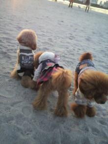 愛犬鈴ちゃん~トイプードル☆ライフスタイル~-2011111716170000.jpg