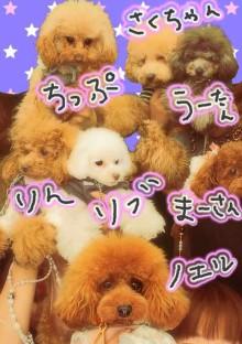愛犬鈴ちゃん~トイプードル☆ライフスタイル~-imageView.jpg
