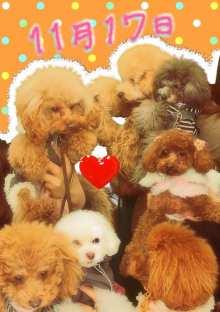 愛犬鈴ちゃん~トイプードル☆ライフスタイル~-11-11-17_4.jpg