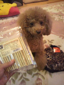 愛犬鈴ちゃん~トイプードル☆ライフスタイル~-2011111719230001.jpg