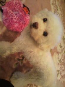 愛犬鈴ちゃん~トイプードル☆ライフスタイル~-2011111719230002.jpg