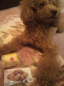 愛犬鈴ちゃん~トイプードル☆ライフスタイル~-2011111722190000.jpg