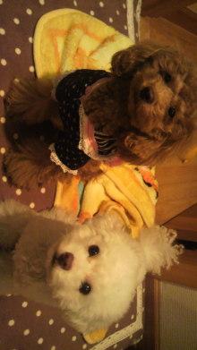 愛犬鈴ちゃん~トイプードル☆ライフスタイル~-2011111816040000.jpg