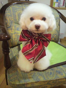 愛犬鈴ちゃん~トイプードル☆ライフスタイル~-2011111817580000.jpg