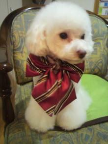 愛犬鈴ちゃん~トイプードル☆ライフスタイル~-2011111817570000.jpg