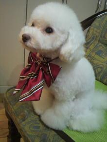 愛犬鈴ちゃん~トイプードル☆ライフスタイル~-2011111817580002.jpg