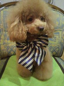 愛犬鈴ちゃん~トイプードル☆ライフスタイル~-2011111818340000.jpg