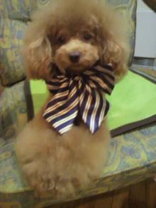 愛犬鈴ちゃん~トイプードル☆ライフスタイル~-2011111818350001.jpg