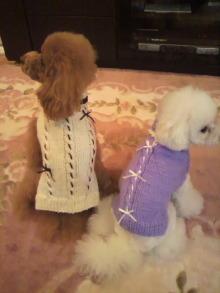 愛犬鈴ちゃん~トイプードル☆ライフスタイル~-2011111818380000.jpg