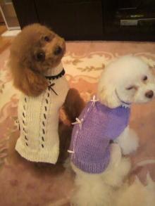 愛犬鈴ちゃん~トイプードル☆ライフスタイル~-2011111818380001.jpg