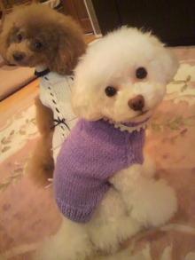 愛犬鈴ちゃん~トイプードル☆ライフスタイル~-2011111818390000.jpg
