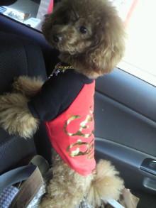 愛犬鈴ちゃん~トイプードル☆ライフスタイル~-2011112214330001.jpg