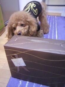 愛犬鈴ちゃん~トイプードル☆ライフスタイル~-2011112412340001.jpg