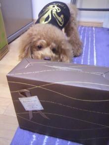 愛犬鈴ちゃん~トイプードル☆ライフスタイル~-2011112412340000.jpg