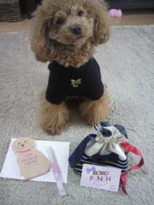 愛犬鈴ちゃん~トイプードル☆ライフスタイル~-2011112412400000.jpg