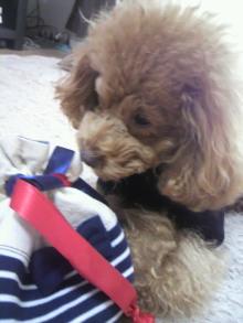 愛犬鈴ちゃん~トイプードル☆ライフスタイル~-2011112412410000.jpg