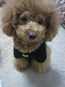 愛犬鈴ちゃん~トイプードル☆ライフスタイル~-2011112814580002.jpg