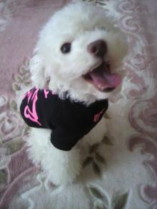 愛犬鈴ちゃん~トイプードル☆ライフスタイル~-2011112909140001.jpg