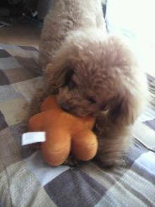 愛犬鈴ちゃん~トイプードル☆ライフスタイル~-2011113011280000.jpg
