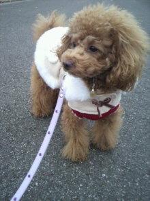 愛犬鈴ちゃん~トイプードル☆ライフスタイル~-2011120215570000.jpg
