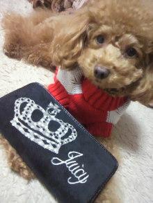 愛犬鈴ちゃん~トイプードル☆ライフスタイル~-2011120219480001.jpg