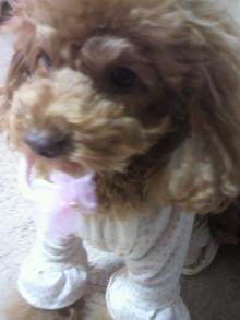 愛犬鈴ちゃん~トイプードル☆ライフスタイル~-2011120311440000.jpg