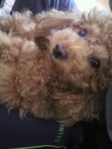 愛犬鈴ちゃん~トイプードル☆ライフスタイル~-2011120410380000.jpg