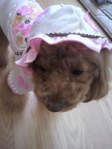 愛犬鈴ちゃん~トイプードル☆ライフスタイル~-2011120510190000.jpg