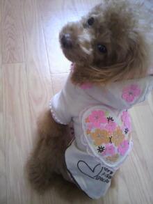 愛犬鈴ちゃん~トイプードル☆ライフスタイル~-2011120510200000.jpg