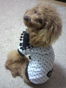 愛犬鈴ちゃん~トイプードル☆ライフスタイル~-2011120718190001.jpg