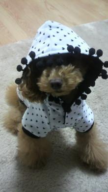 愛犬鈴ちゃん~トイプードル☆ライフスタイル~-2011120718320000.jpg