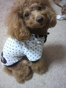 愛犬鈴ちゃん~トイプードル☆ライフスタイル~-2011120718200000.jpg