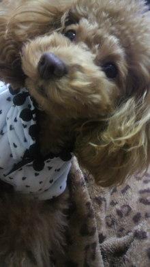 愛犬鈴ちゃん~トイプードル☆ライフスタイル~-2011120718470000.jpg