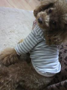 愛犬鈴ちゃん~トイプードル☆ライフスタイル~-2011120917520000.jpg