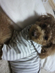 愛犬鈴ちゃん~トイプードル☆ライフスタイル~-2011120917540002.jpg