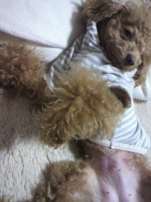 愛犬鈴ちゃん~トイプードル☆ライフスタイル~-2011120917550000.jpg