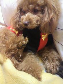 愛犬鈴ちゃん~トイプードル☆ライフスタイル~-2011121323390000.jpg