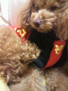 愛犬鈴ちゃん~トイプードル☆ライフスタイル~-2011121323390002.jpg