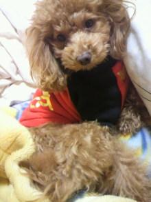 愛犬鈴ちゃん~トイプードル☆ライフスタイル~-2011121323370000.jpg