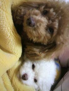 愛犬鈴ちゃん~トイプードル☆ライフスタイル~-2011121323340001.jpg