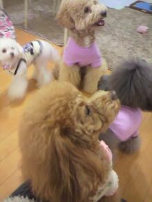 愛犬鈴ちゃん~トイプードル☆ライフスタイル~-2011121516580001.jpg