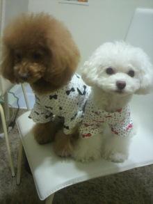 愛犬鈴ちゃん~トイプードル☆ライフスタイル~-2011121522560000.jpg
