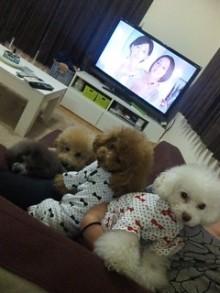 愛犬鈴ちゃん~トイプードル☆ライフスタイル~-image1692.jpg