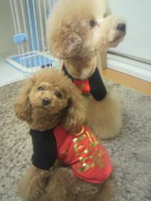 愛犬鈴ちゃん~トイプードル☆ライフスタイル~-2011121614190000.jpg