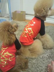 愛犬鈴ちゃん~トイプードル☆ライフスタイル~-2011121614200000.jpg