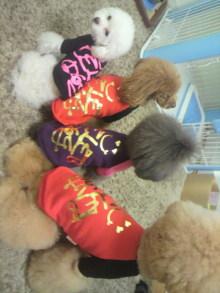 愛犬鈴ちゃん~トイプードル☆ライフスタイル~-2011121614220000.jpg